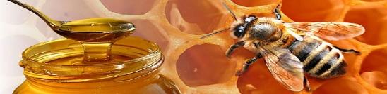 mel abella